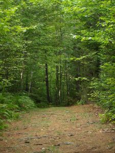trail in the woods of sterling ridge resort
