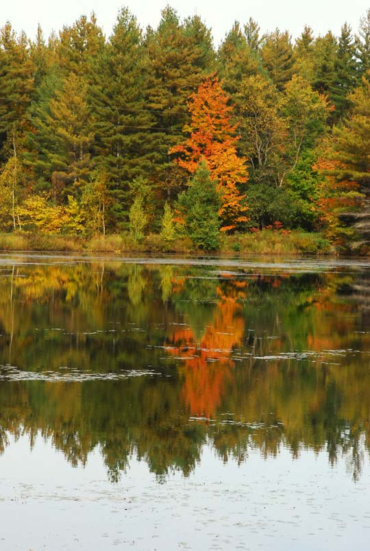 Fall Bragging Rights… Vermont Fall Foliage