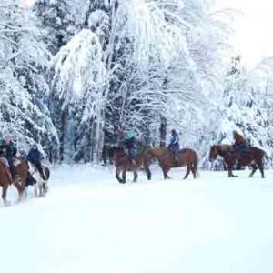 Horseback riding through the Vermont snow