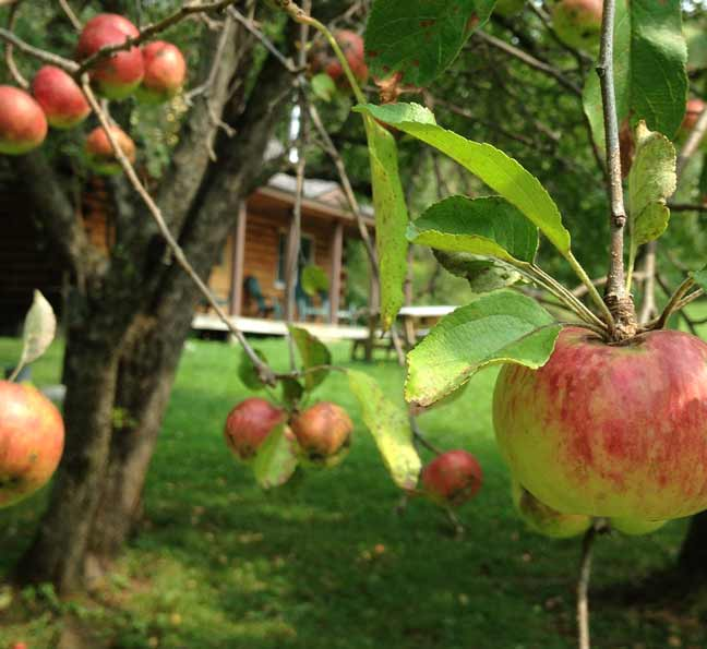 Apples and Log Cabins in Vermont