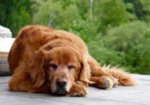 dog friendly resort sterling ridge vermont