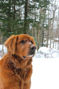 Dog at Sterling Ridge Resort