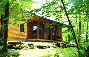 Log cabin in lush green foliage