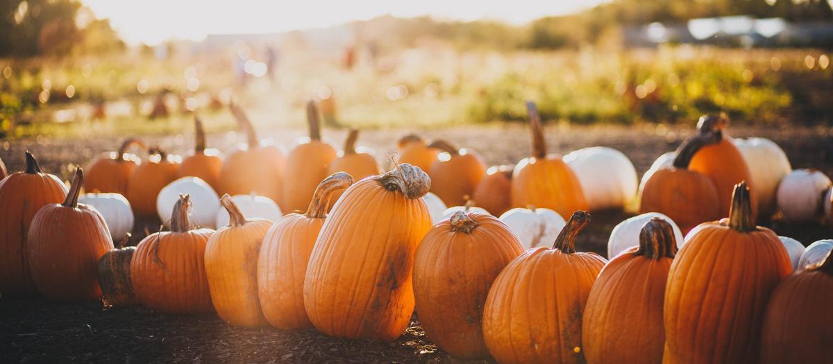 pumpkin carving in Vermont halloween trip