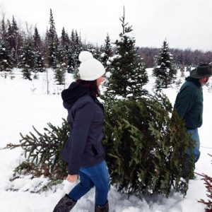cut your own christmas tree