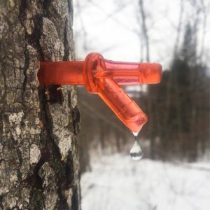 maple syrup sap maple syrup process vacation tour experience in vermont